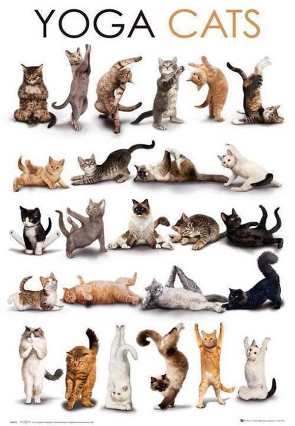 Yoga Cats Doing Various Poses